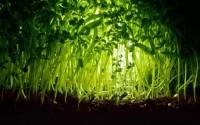 """Thực vật nói chuyện với nhau qua một """"mạng internet"""" bí mật"""