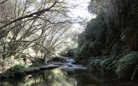 Blue Mountains – ngọn núi xanh kỳ lạ ở Australia