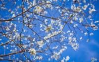 Tháng 1 tại Đà Lạt có những đặc sản và điểm Du lịch nào hút khách ?